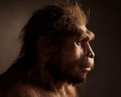 Человек прямоходящий (Хомо эректус), непосредственный предшественник современного человека. Они занимали территорию нынешней Индонезии около 1,3–1 миллиона лет назад.